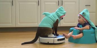 sharkcat-bebe